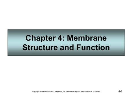 4-1 Chapter 4: Membrane Structure and Function. 4-2 Plasma Membrane Structure and Function The plasma membrane separates the internal environment of the.