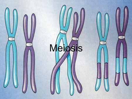 Meiosis. What is Meiosis and Why is it Important? To really understand basic concepts of genetics, you need to know how hereditary traits are passed from.