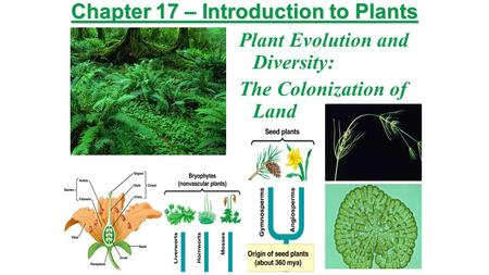 Chapter 17 – Introduction to Plants