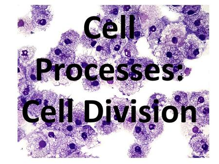Cell Processes: Cell Division. Studying a Cell's Size: Finding surface area to volume ratio 2.3 cm 4.5 cm.