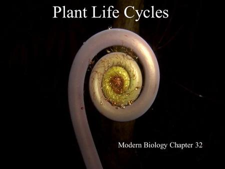 Plant Life Cycles Modern Biology Chapter 32. Alternation of Generations: the overview.