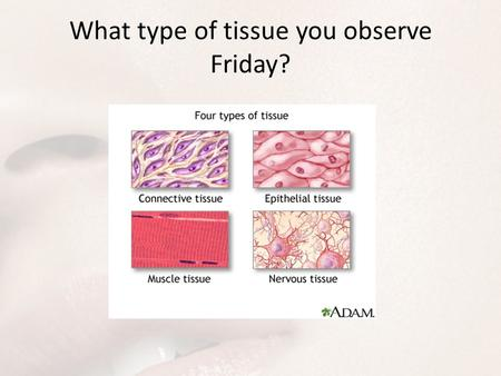 What type of tissue you observe Friday?. Integumentary System Integument: any covering or enclosure -Derma: skin Dermatologist?