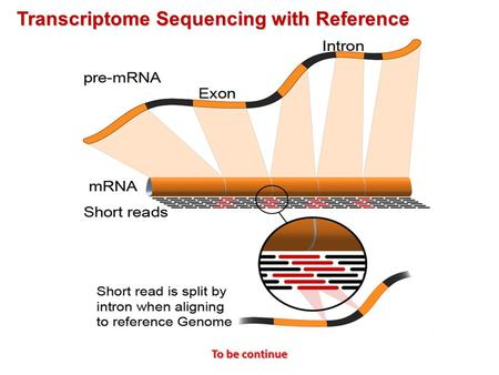 Transcriptome Sequencing with Reference To be continue.