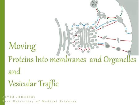 Javad Jamshidi Fasa University of Medical Sciences Proteins Into membranes and Organelles and Vesicular Traffic Moving.