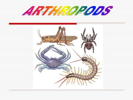 They have got 6 legs and 3 main parts; the head, the thorax and the abdomen. A big part of insects have got wings. The early stage is different form.