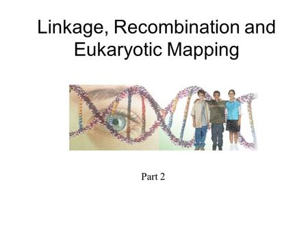 Linkage, Recombination and Eukaryotic Mapping Part 2.