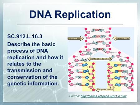 Dna Replication Essay