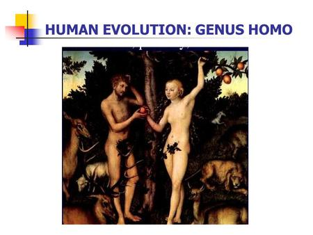 HUMAN EVOLUTION: GENUS HOMO Time-Line of Hominid Evolution: 5 Adaptive Radiations First Adaptive Radiation: 6-7 mya in the late Miocene, potential last.