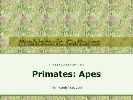 Prehistoric Cultures Prehistoric Cultures Class Slides Set 12D Primates: Apes Tim Roufs' section.