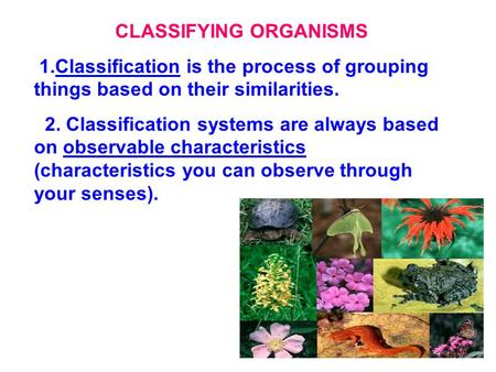 CLASSIFYING ORGANISMS 1.Classification is the process of grouping things based on their similarities. 2. Classification systems are always based on observable.