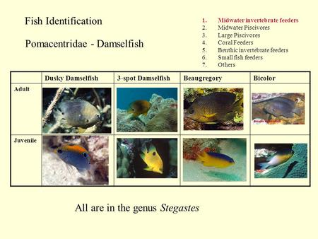 Fish Identification 1.Midwater invertebrate feeders 2.Midwater Piscivores 3.Large Piscivores 4.Coral Feeders 5.Benthic invertebrate feeders 6.Small fish.