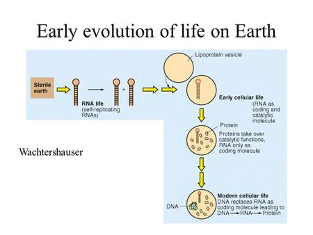 Early evolution of life on Earth Wachtershauser. Miller and Urey experiment.