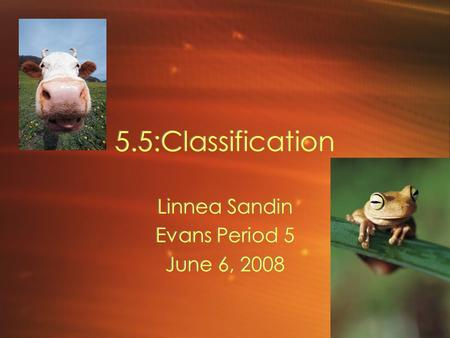 5.5:Classification Linnea Sandin Evans Period 5 June 6, 2008 Linnea Sandin Evans Period 5 June 6, 2008.