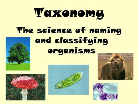 The science of naming and classifying organisms Taxonomy.