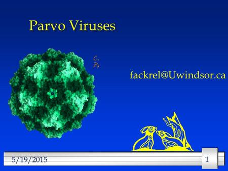 11 5/19/2015 Parvo Viruses 22 5/19/2015 Parvo Viruses l Structure l Classification l Multiplication l Clinical manifestations l Epidemiology.