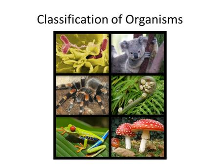 Classification of Organisms. Dichotomous Key A dichotomous key is a method for determining the identity of something by going through a series of choices.