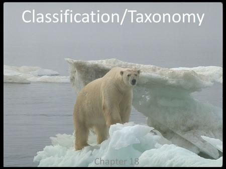 Classification/Taxonomy