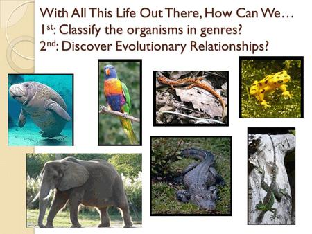 With All This Life Out There, How Can We… 1 st : Classify the organisms in genres? 2 nd : Discover Evolutionary Relationships?