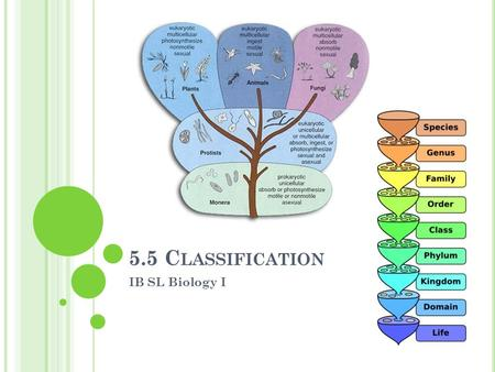 5.5 C LASSIFICATION IB SL Biology I. W HY C LASSIFY ? Taxonomy - the science and practice of classification Humans have developed classification systems.