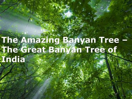 The Amazing Banyan Tree – The Great Banyan Tree of India
