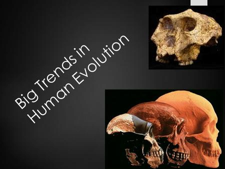 Big Trends in Human Evolution. Introduction – Human Evolution  Mosaic Evolution: ________________________  With respect to human evolution: _____________________.