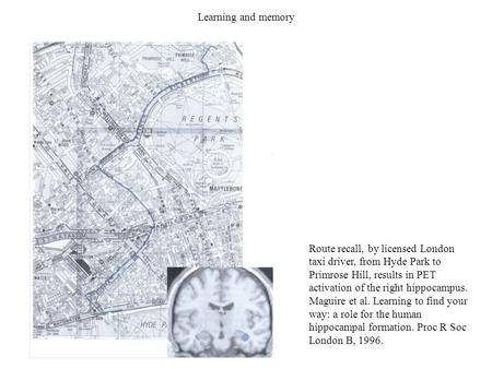 Learning and memory Route recall, by licensed London taxi driver, from Hyde Park to Primrose Hill, results in PET activation of the right hippocampus.