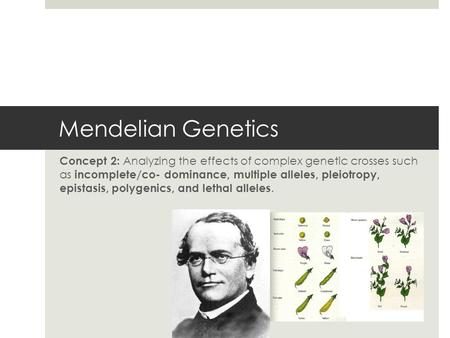 Mendelian Genetics Concept 2: Analyzing the effects of complex genetic crosses such as incomplete/co- dominance, multiple alleles, pleiotropy, epistasis,