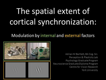The spatial extent of cortical synchronization: Modulation by internal and external factors Adrian M Bartlett, BA Cog. Sci. Perception & Plasticity Lab.