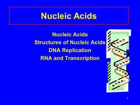 1 Nucleic Acids Structures of Nucleic Acids DNA Replication RNA and Transcription.