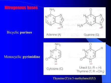 Nitrogenous bases Bicyclic purines Monocyclic pyrimidine