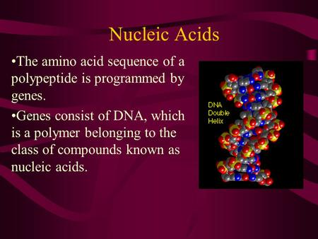 Nucleic Acids The amino acid sequence of a polypeptide is programmed by genes. Genes consist of DNA, which is a polymer belonging to the class of compounds.