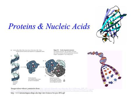 Proteins & Nucleic Acids Images taken without permission from
