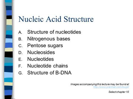 Nucleic Acid Structure A. Structure of nucleotides B. Nitrogenous bases C. Pentose sugars D. Nucleosides E. Nucleotides F. Nucleotide chains G. Structure.