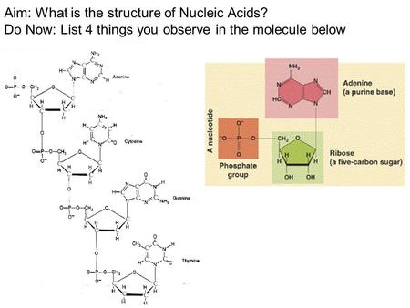 Aim: What is the structure of Nucleic Acids? Do Now: List 4 things you observe in the molecule below.