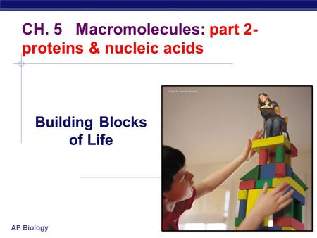 AP Biology 2007-2008 CH. 5 Macromolecules: part 2- proteins & nucleic acids Building Blocks of Life.