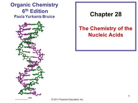 © 2011 Pearson Education, Inc. 1 Chapter 28 The Chemistry of the Nucleic Acids Organic Chemistry 6 th Edition Paula Yurkanis Bruice.
