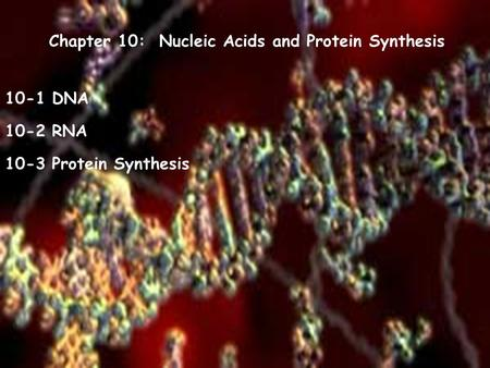 Chapter 10: Nucleic Acids and Protein Synthesis 10-1 DNA 10-2 RNA 10-3 Protein Synthesis.
