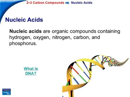 End Show 2–3 Carbon Compounds Slide 1 of 37 Nucleic Acids Nucleic acids are organic compounds containing hydrogen, oxygen, nitrogen, carbon, and phosphorus.