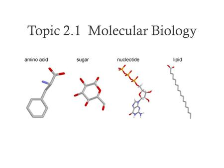 Topic 2.1 Molecular Biology