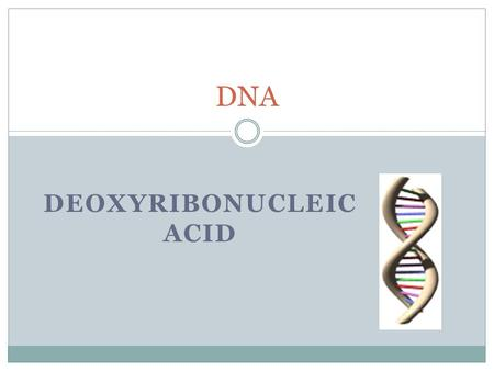 DEOXYRIBONUCLEIC ACID DNA. O.L Lesson Objectives At the end of this lesson you should be able to 1. Outline the simple structure of DNA – 2 strands and.