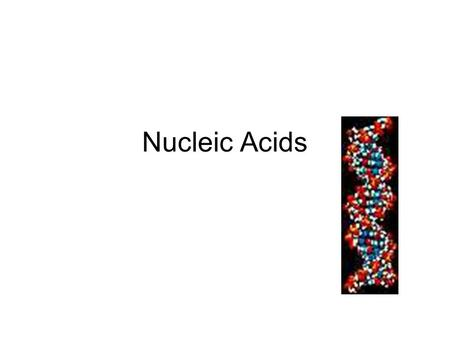 Nucleic Acids. Elements Nucleic Acids Contain C, H, O,N, P.