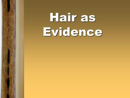 Hair as Evidence. Introduction  Human hair is one of the most frequently found pieces of evidence at the scene of a violent crime. It can provide a link.