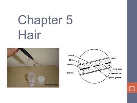 1 Chapter 5 Hair. 2 Class evidence Circumstantial evidence – lots of people have same hair color Places someone at the scene Only becomes individual evidence.