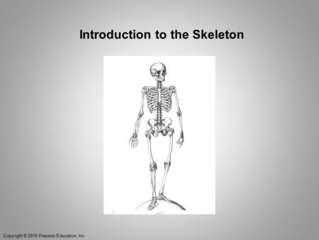 Introduction to the Skeleton