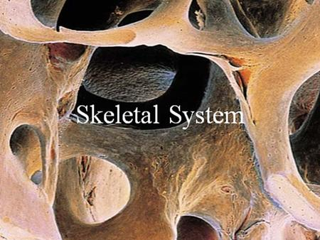 The Skeletal System Slide 5.1 Copyright © 2003 Pearson Education, Inc. publishing as Benjamin Cummings  Parts of the skeletal system  Bones (skeleton)