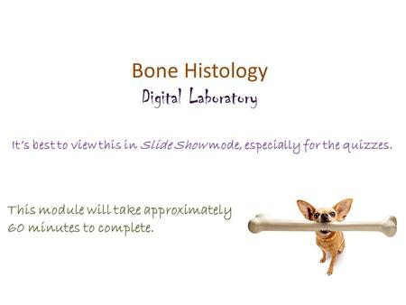 Bone Histology Digital Laboratory It's best to view this in Slide Show mode, especially for the quizzes. This module will take approximately 60 minutes.