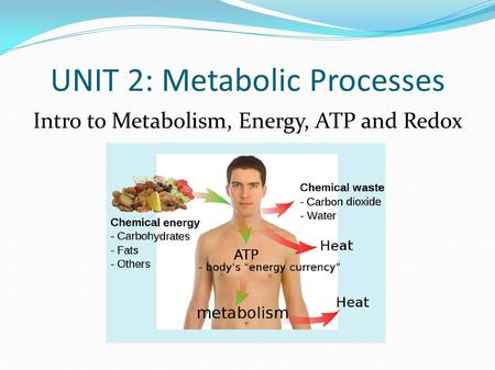 UNIT 2: Metabolic Processes Intro to Metabolism, Energy, ATP and Redox.