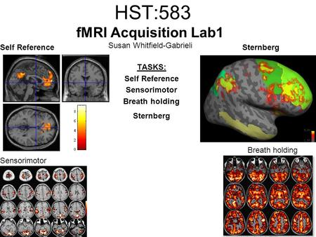 HST:583 fMRI Acquisition Lab1 Susan Whitfield-Gabrieli TASKS: Self Reference Sensorimotor Breath holding Sternberg Self ReferenceSternberg Breath holding.