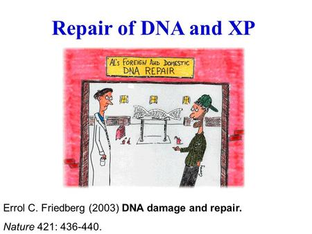 Repair of DNA and XP Errol C. Friedberg (2003) DNA damage and repair. Nature 421: 436-440.