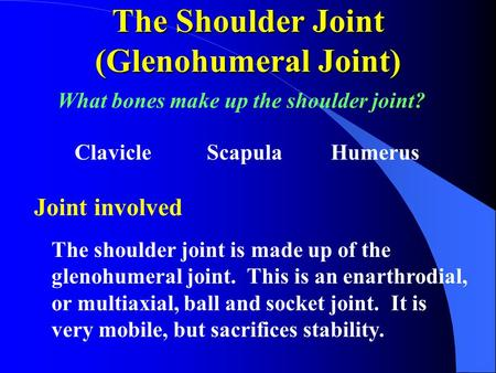 The Shoulder Joint (Glenohumeral Joint)